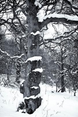 Garscadden Wood  (East) - 4