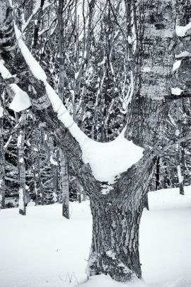 Garscadden Wood  (West) - 1