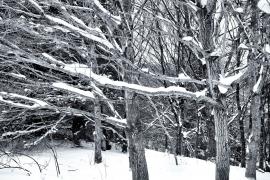 Garscadden Wood  (West) - 2