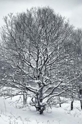 Garscadden Wood  (West) - 4