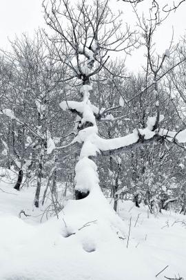 Garscadden Wood  (West) - 5