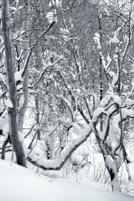 Garscadden Wood  (West) - 6