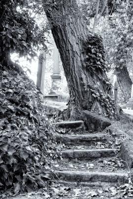 Steps, Brookfields Cemetery